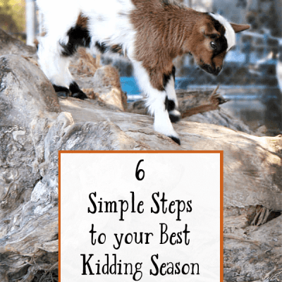 6 Simple Steps to Your Best Kidding Season Yet!