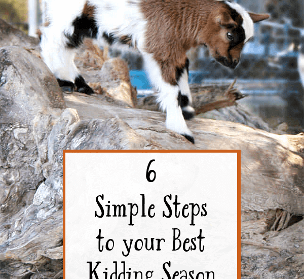 6 Simple Steps to your Best Kidding Season Yet