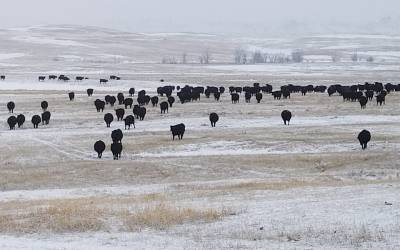 VIDEO: Linda Gilbert, Cow/Calf Operator explains the importance of MCOOL