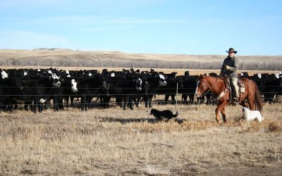 "VIDEO: Kenny Fox regarding current cattle market: ""We need a market, not a handout"""