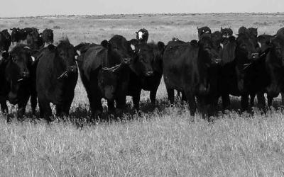 """VIDEO: Cattle Producers and Political Activist, Mike Callicrate, """"egos need to be checked and prejudices put aside."""""""