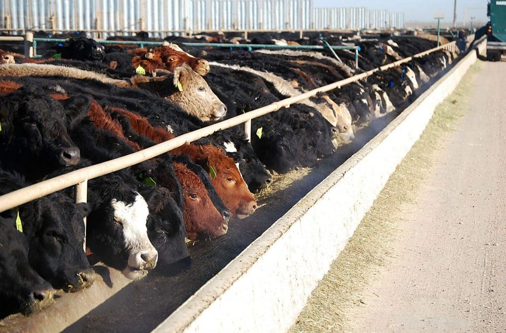 John Nalivka discusses the importance of cattle imports and exports