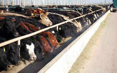 JohnNalivka discusses the importance of cattle imports and exports