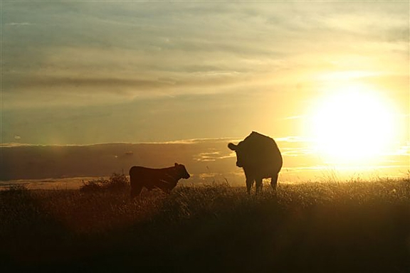 VIDEO: Vaughn Meyer discusses the need for a beef checkoff referendum