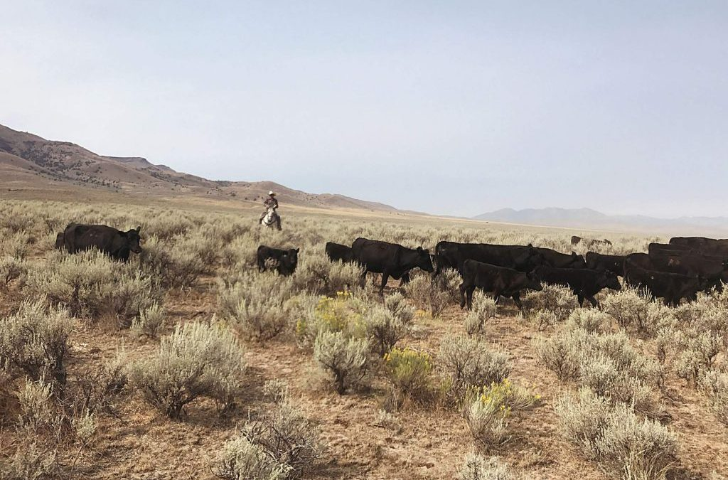 VIDEO: Rancher and agricultural activist, Curtis Martin, stresses the importance of cattle producers working together to make change