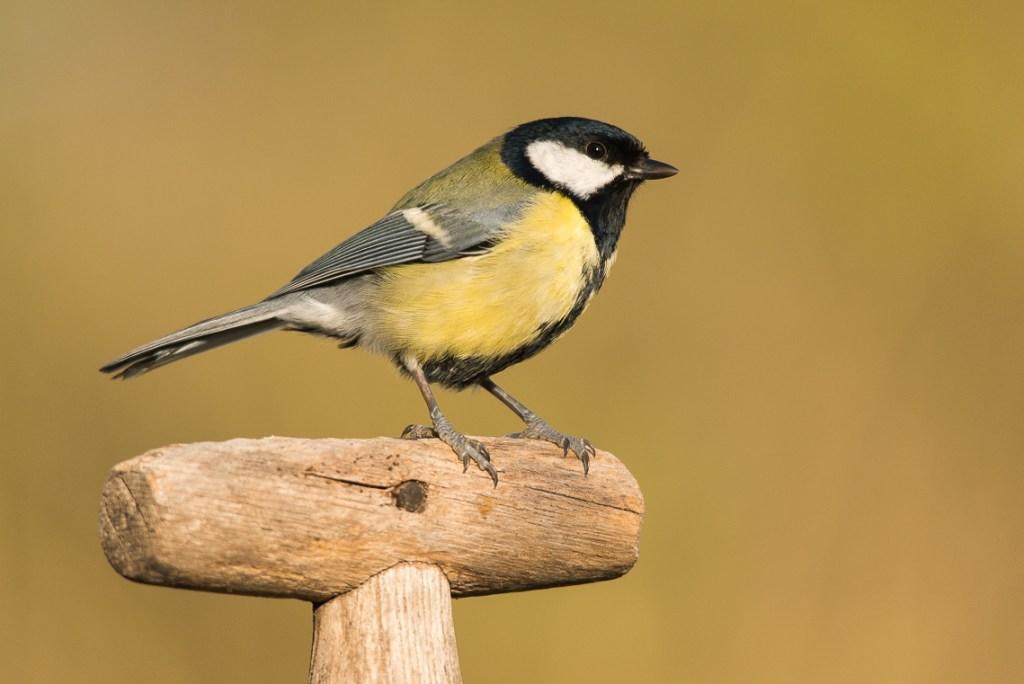 bird-table-photography_02
