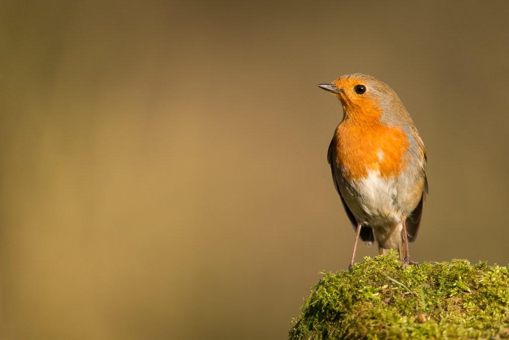 bird-table-photography_03