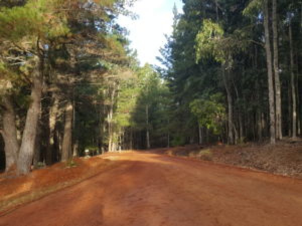 Gravel road to Nannup