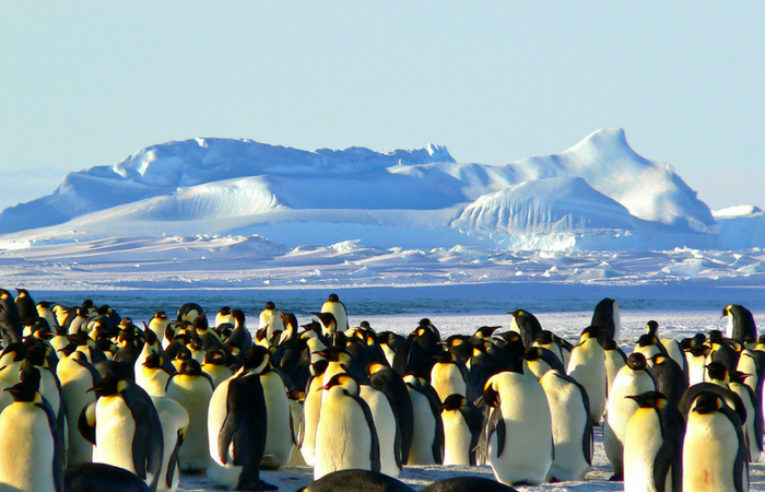 A Desire to turn a dream into Reality – Visiting Antarctica