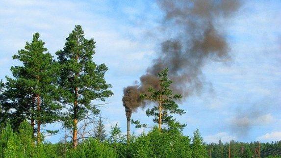 Définition photosynthèse arbre et pollution