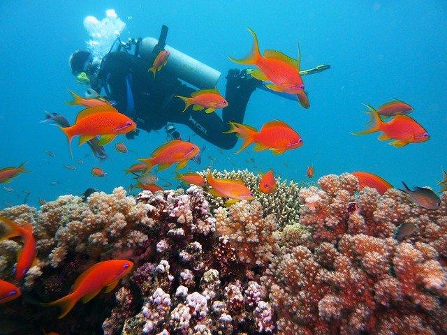Plongée parmi les coraux des fonds marins