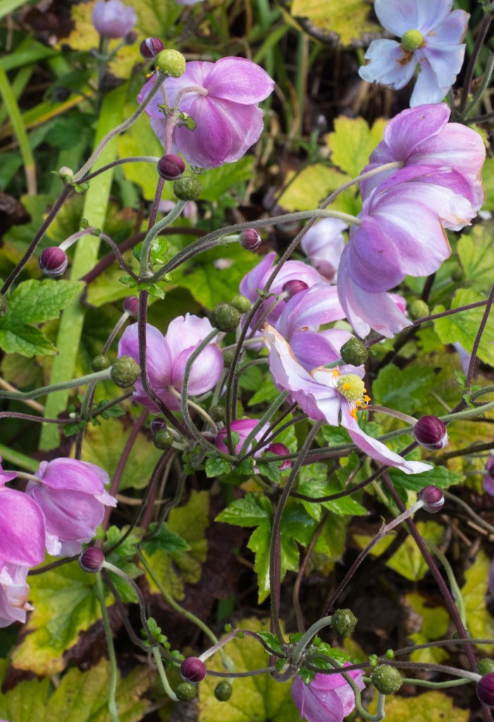 mauve-flowers