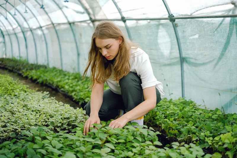 woman touching green plants
