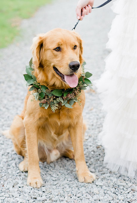 Golden Retriever with Greenery Wreath - Fairly Southern