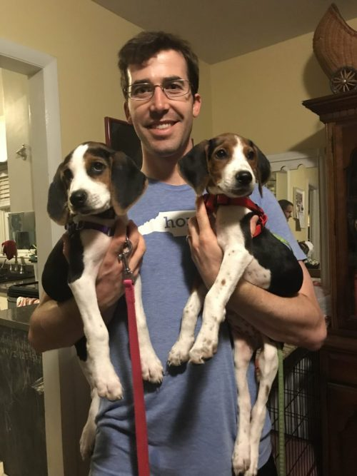 Coonhound Puppies | Fairly Southern
