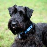My clients' dog Duke