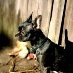 Pet Portrait of Super