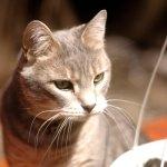 Pet Portrait of Greta