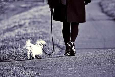 How to walk a dog on a leash