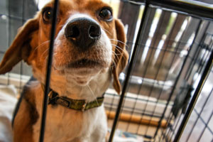 First-time dog owner: Tip # 11 give him a home