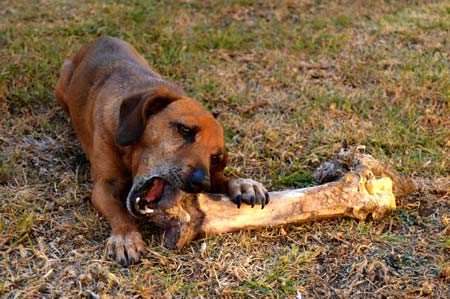 What is dog boarding? A place to sleep and eat away from home.