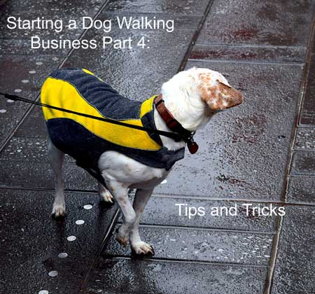 starting a dog walking business