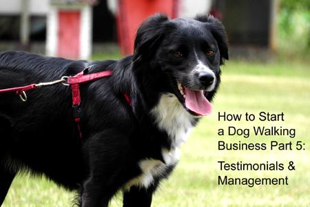 starting a dog walking business, part 5