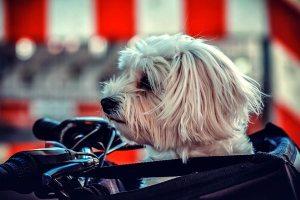 Dog Walking Bag, Belt, Fanny Pack: Essential Gear Or Not?