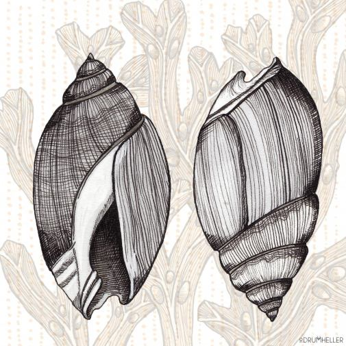 Shell Twins