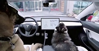 Tesla's Dog Mode, New Update by Tesla