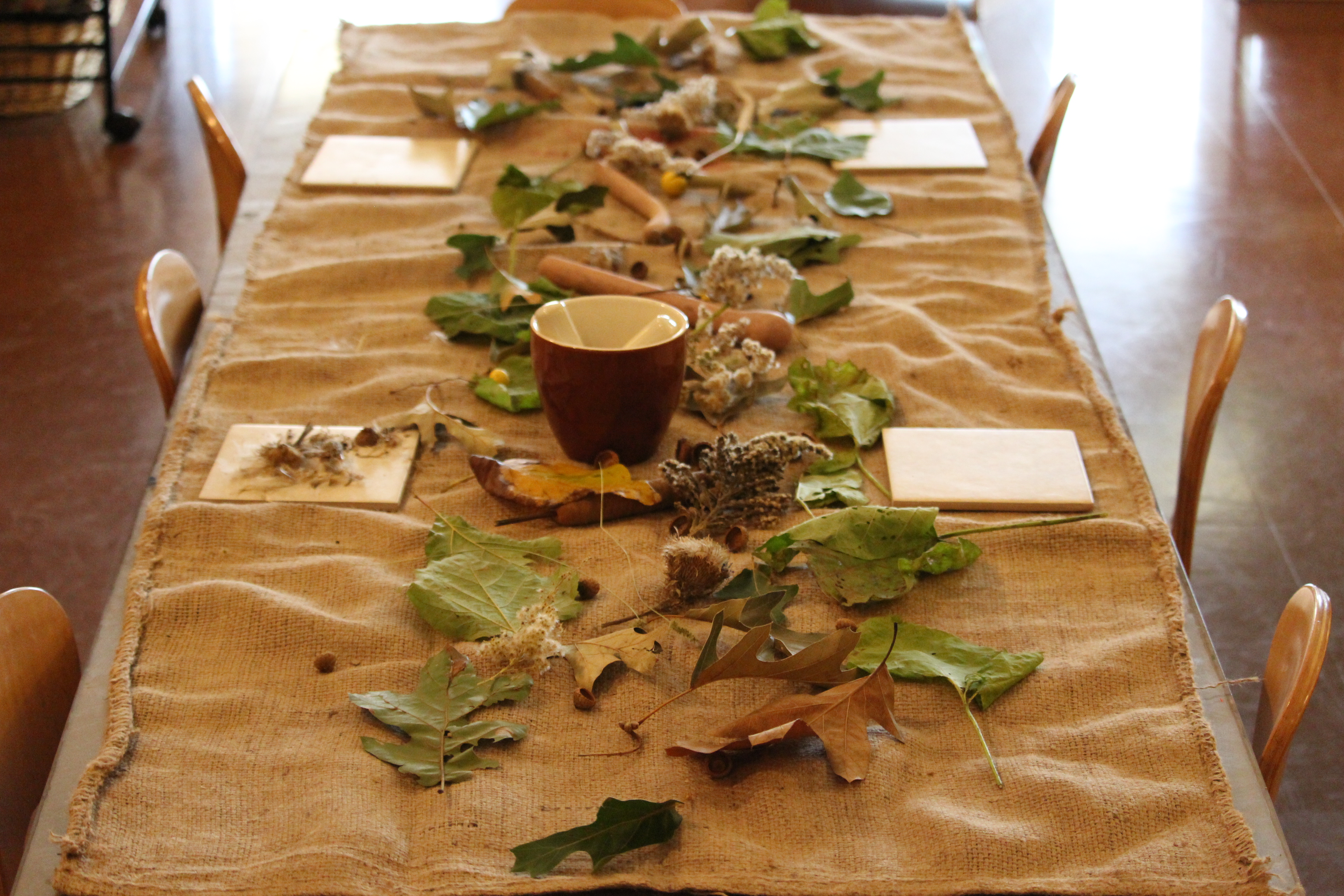 Nature Inspired Provocations