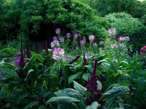 attirer les instectes pollinisateurs