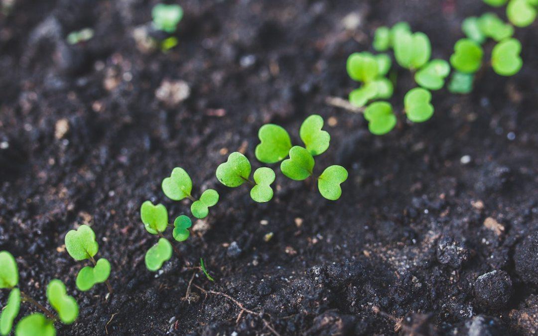 12.28 Good Soil