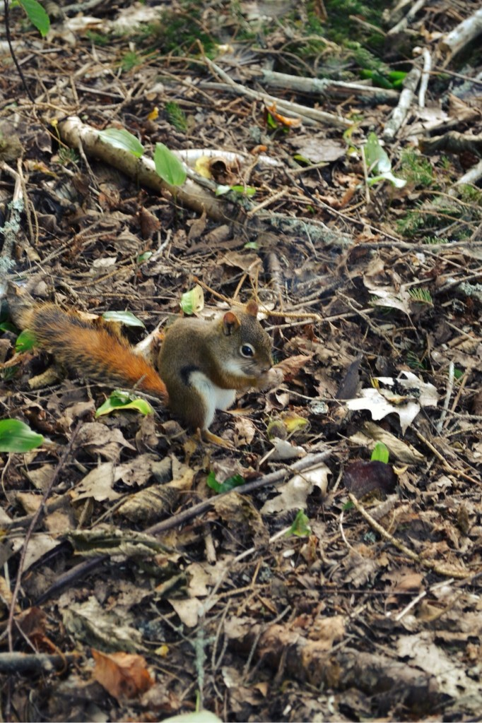 Red Squirrel | Faith, Hope, Love, and Luck Survive Despite a Whiskered Accomplice