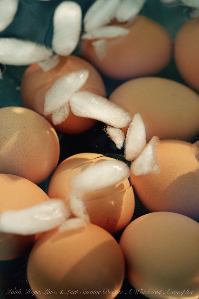 How to Hard-Boil An Egg | Faith, Hope, Love, & Luck Survive Despite A Whiskered Accomplice