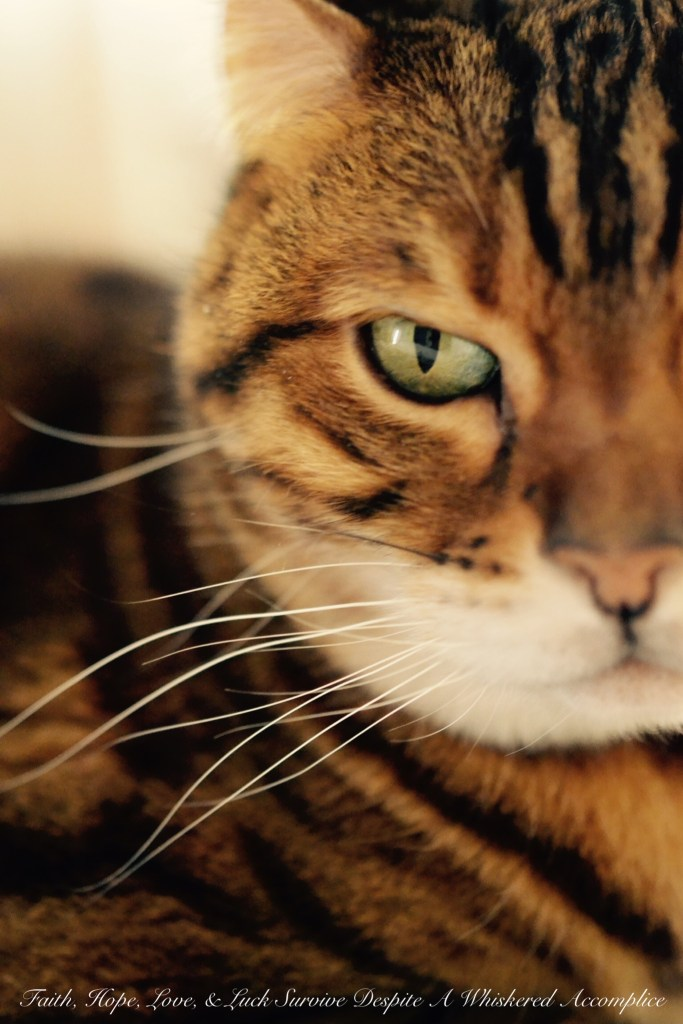 Happy Caturday! - 04/11/2015 | Faith, Hope, Love, and Luck Survive Despite a Whiskered Accomplice