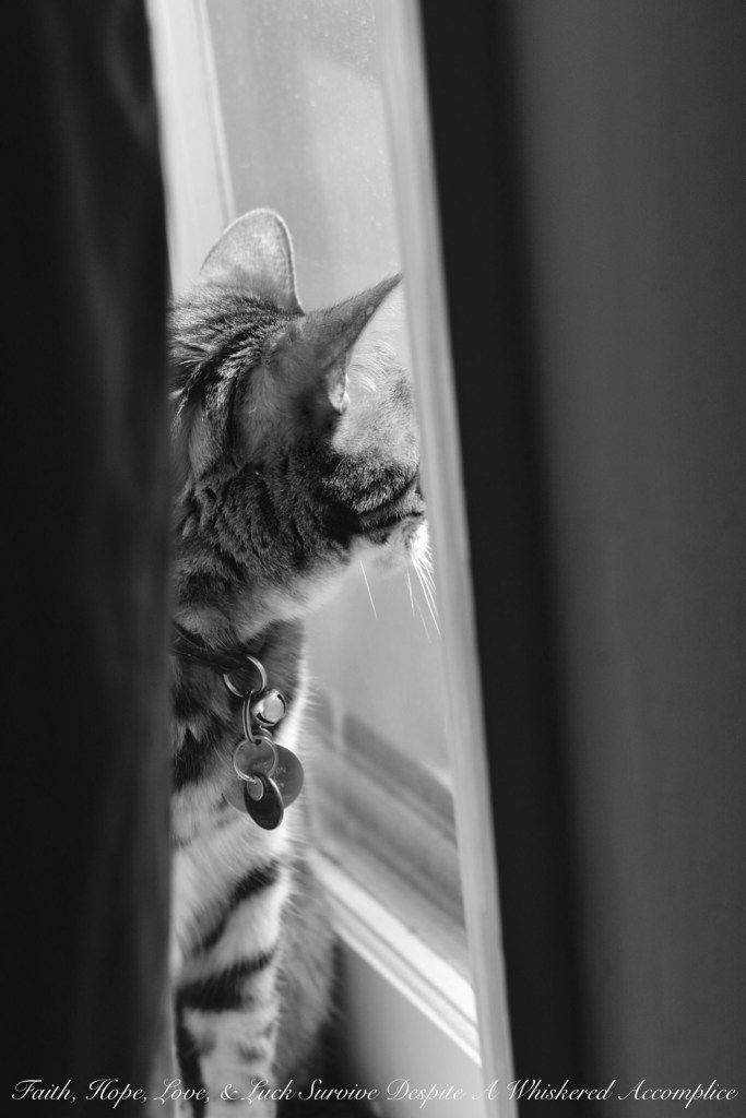 Happy Caturday! - 08/08/2015 | Faith, Hope, Love, and Luck Survive Despite a Whiskered Accomplice