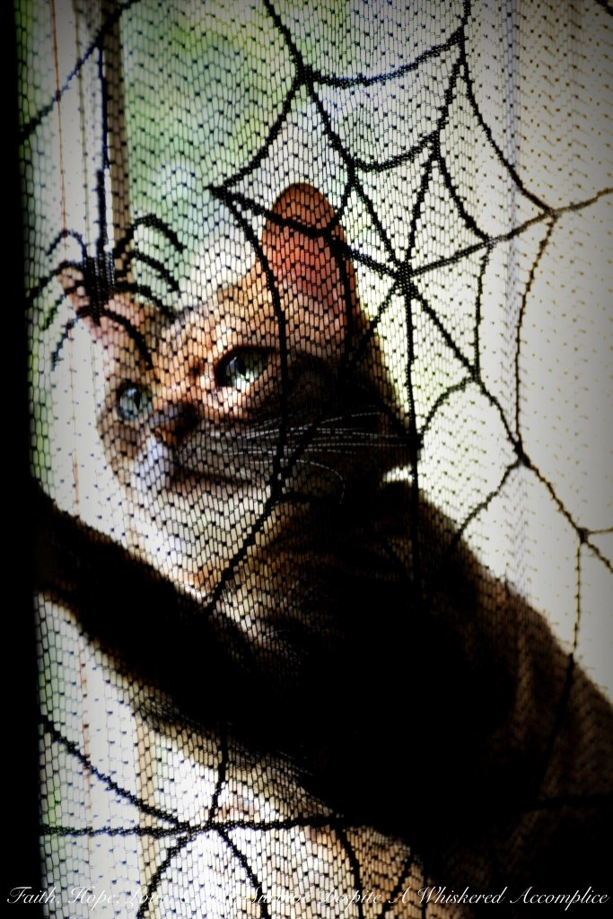 My Little Halloween Helper | Faith, Hope, Love, and Luck Survive Despite a Whiskered Accomplice