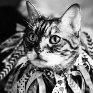 Instagram - Get Creative with Your Halloween Costume | Faith, Hope, Love, and Luck Survive Despite a Whiskered Accomplice