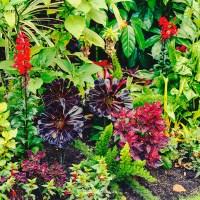 St James Park's blooms part 1