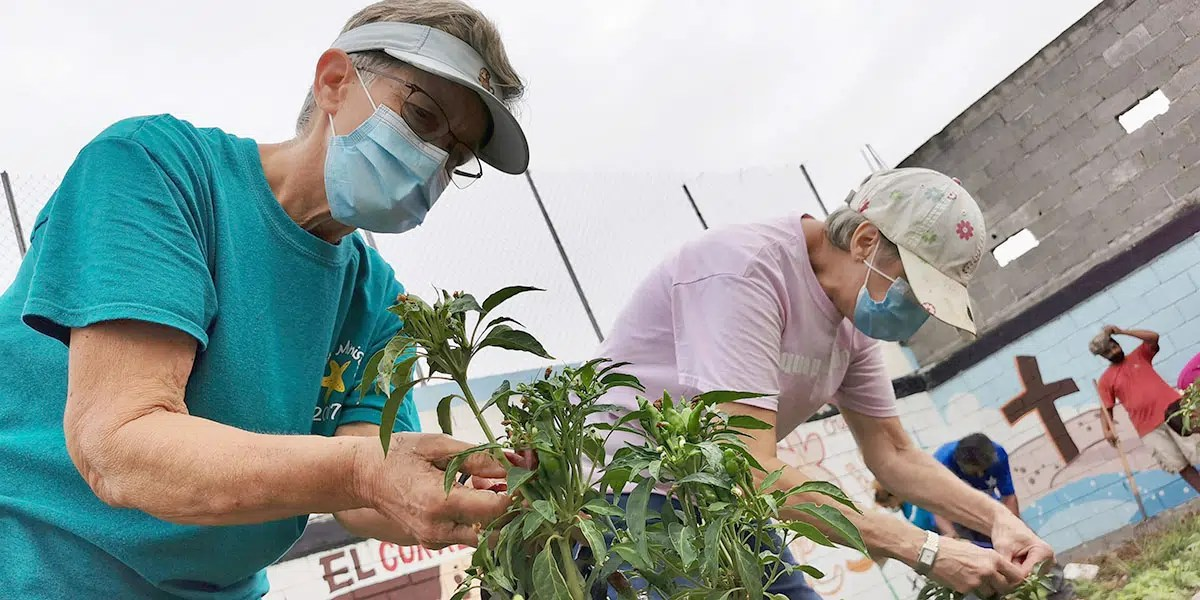 The team from Covenant Presbyterian harvesting peppers from the garden in Naranjito Mexico