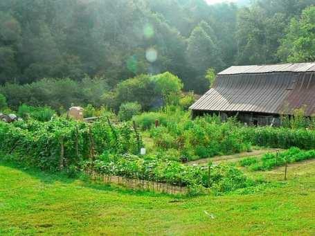 mid summer garden 2011