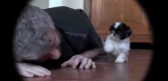 Shi Itzu puppy adorable fun