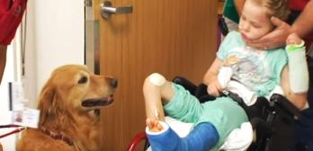 service dog helps boy with brain injury