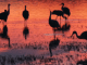 Antonio Ocasio – La Fievre (The Fever) mp3 download
