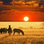 Африка туралы қызықты мәліметтер