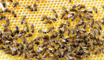 Пчела сорвала аравийцу мировой рекорд