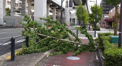 В Японии объявили о первой жертве тайфуна «Трами»
