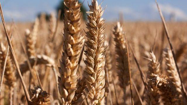 Ціни на хліб: чому вартість хлібобулочних виробів здорожчає
