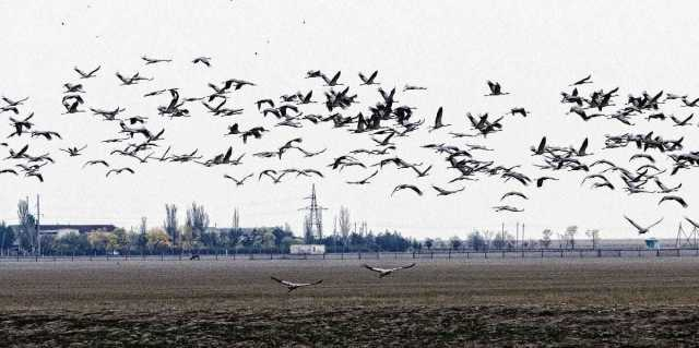Экоцид. Фермерский яд убивает сотни редких птиц, но это лишь вершина айсберга